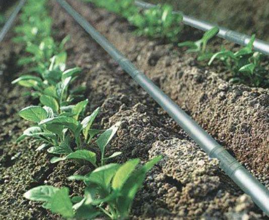 irrigacion5